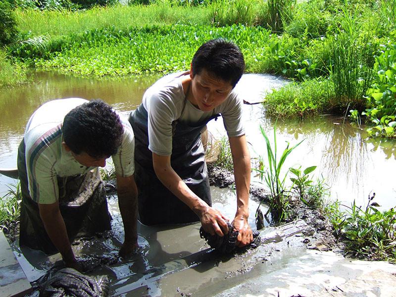 奄美・奄美大島と言えば泥染め-プルプルツルツルの細かな泥-奄美の自然から生まれた奇跡の泥です